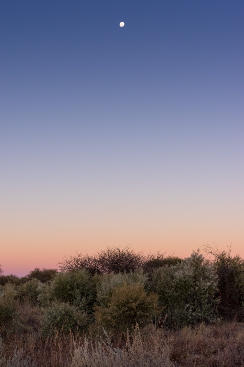 Moonrise over the bush, Namibia.