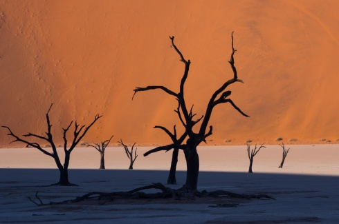 Dead camelthorn trees in the famous Deadvlei, Namibia.