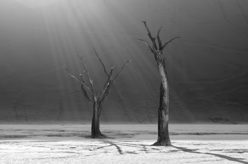 Sunrays are illuminating dead camelthorn trees in the famous Deadvlei in Namib-Naukluft National Park, Namibia.